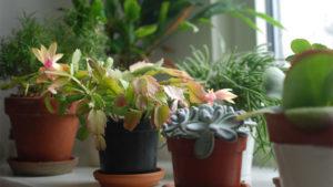 House Plants & More