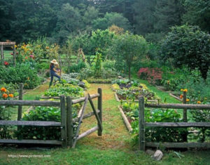 one thousand Ideas About Vegetable Garden Layouts On Pinterest