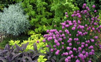 A Flower And Herb Garden