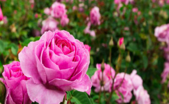 how to grow a beautiful garden