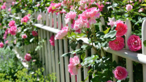 The Organic Rose Gardener