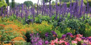Perennial Flower Gardening For Beginners
