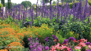 Perennial Flower Gardening For Beginners