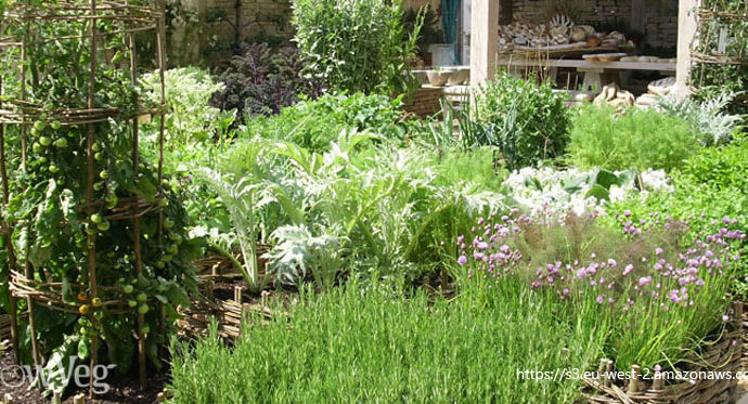 Planning Your Garden and Planting in January