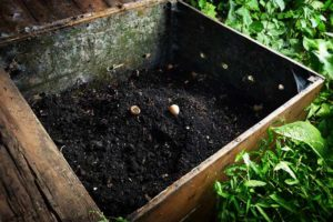 Composting With Worms at Home