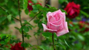 Gardening Secrets of the Pros