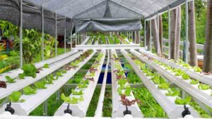 Love Your Hydroponics Garden - Add a Greenhouse