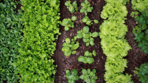 Reasons For Organic Gardening