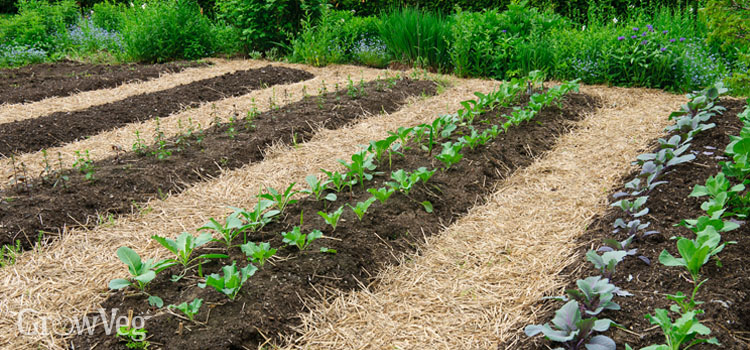 Tips on Acquiring Prepared For Gardening Season