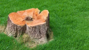 Get Rid Of Any Unwanted Tree, Root, Or Stump