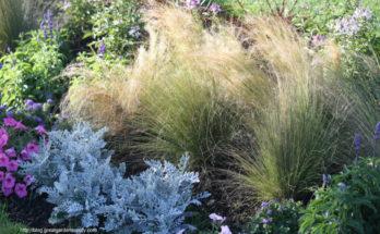 Gardening – Choosing Plants