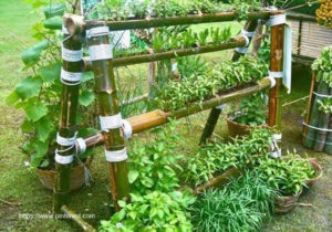 Tips on Producing an Outdoor Hydroponic Backyard