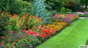 Gardening - Choosing Plants For Your Garden