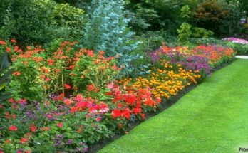 Gardening - Choosing Plants For Your Garden