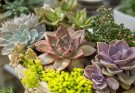 6 Cactus Garden Inspirations That You Can Make At Home